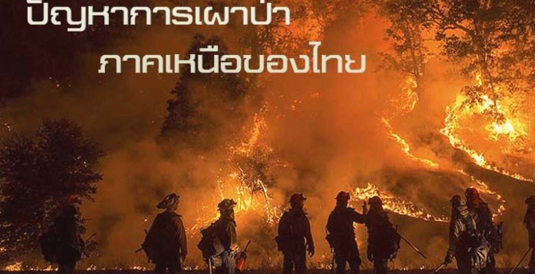 เผาป่า